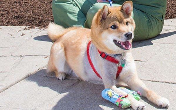 Photo of Bento the puppy